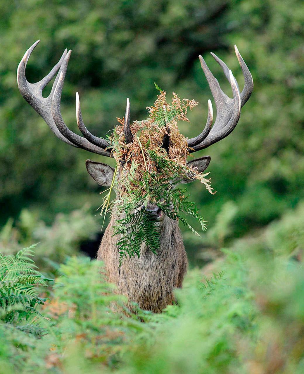 "<a href=""http://comedywildlifephoto.com/"" target=""_blank"">Comedy Wildlife Photography Awards</a>"