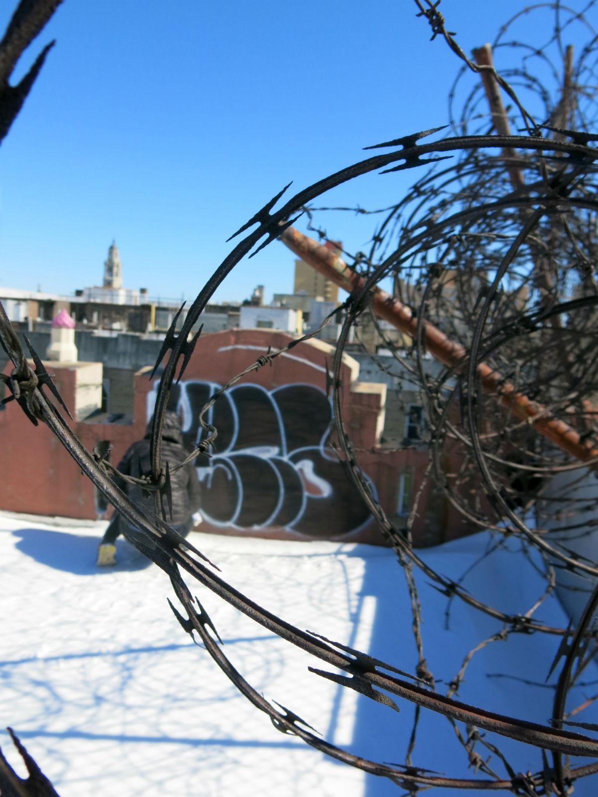 Mina è uno dei 6 artisti conivolti da Just Cavalli per reinterpretare il logo del brand in chiave street art