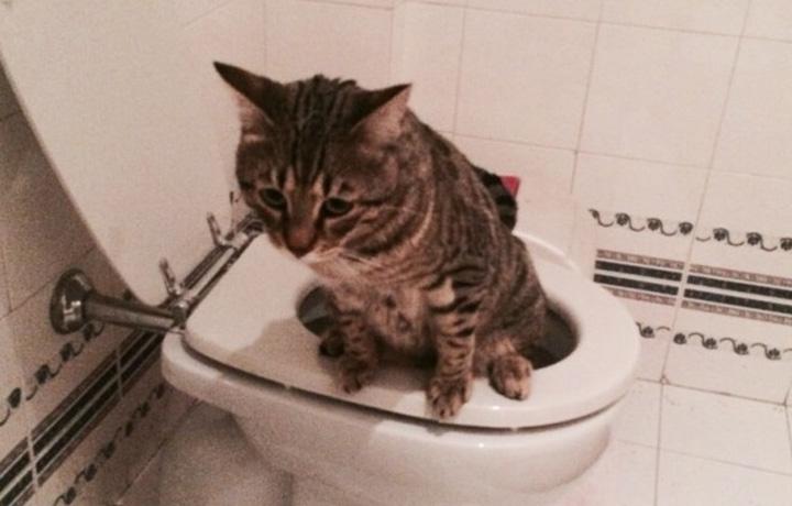 Questo è il gatto della nostra collega Cecilia, è stata la cosa più divertente che abbiamo visto durante i cinque giorni di @DivanoRolling dedicati a Sanremo