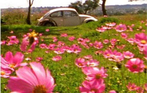 Escarabajo (2005) - Foto di Damián Ortega - Courtesy the artist and kurimanzutto, Mexico City