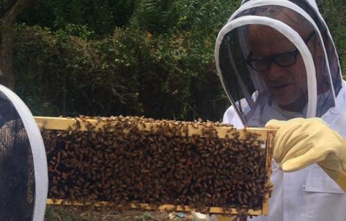 """""""Immerso nel super organismo dell'arnia. Adoro le mie api. Le api di Flea"""" Foto: Instagram"""