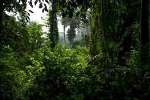 Dominique Catton, La Foresta Sacra, Sacred Forest, Senegal, foto, gallery, fotografie, Casamance