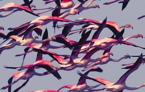 """Un dettaglio di """"Gore"""", il nuovo album dei Deftones in uscita l'8 aprile"""