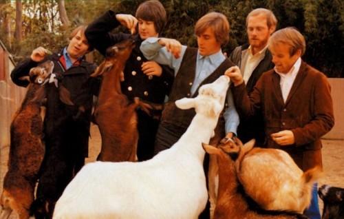 """Un dettaglio della copertina di """"Pet Sounds"""", l'album dei Beach Boys del 1966"""