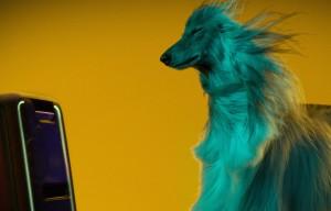 Il 68% delle volte i cani si sono avvicinati di più allo speaker con la musica moderna