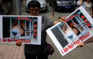 Cos'è il festival del cane di Yulin per cui protestano animalisti e star