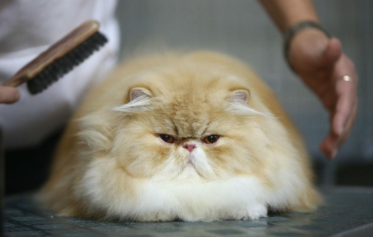 Come i gatti hanno conquistato il mondo