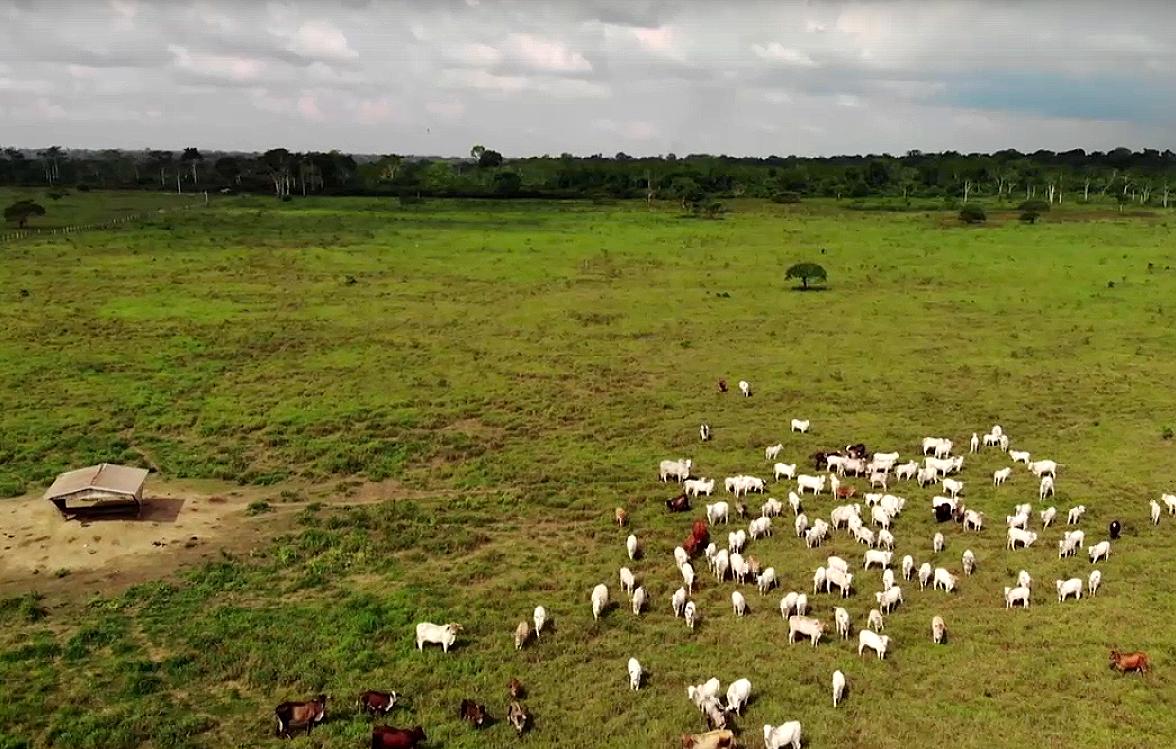 La deforestazione dell'Amazzonia è ancora fuori controllo
